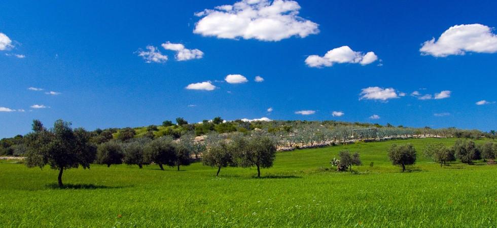 Puglia Panorama