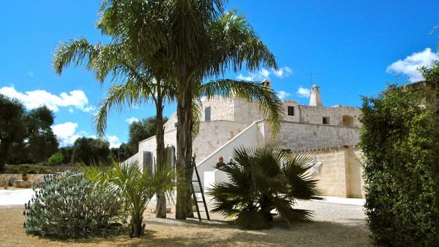 palm tree and villa