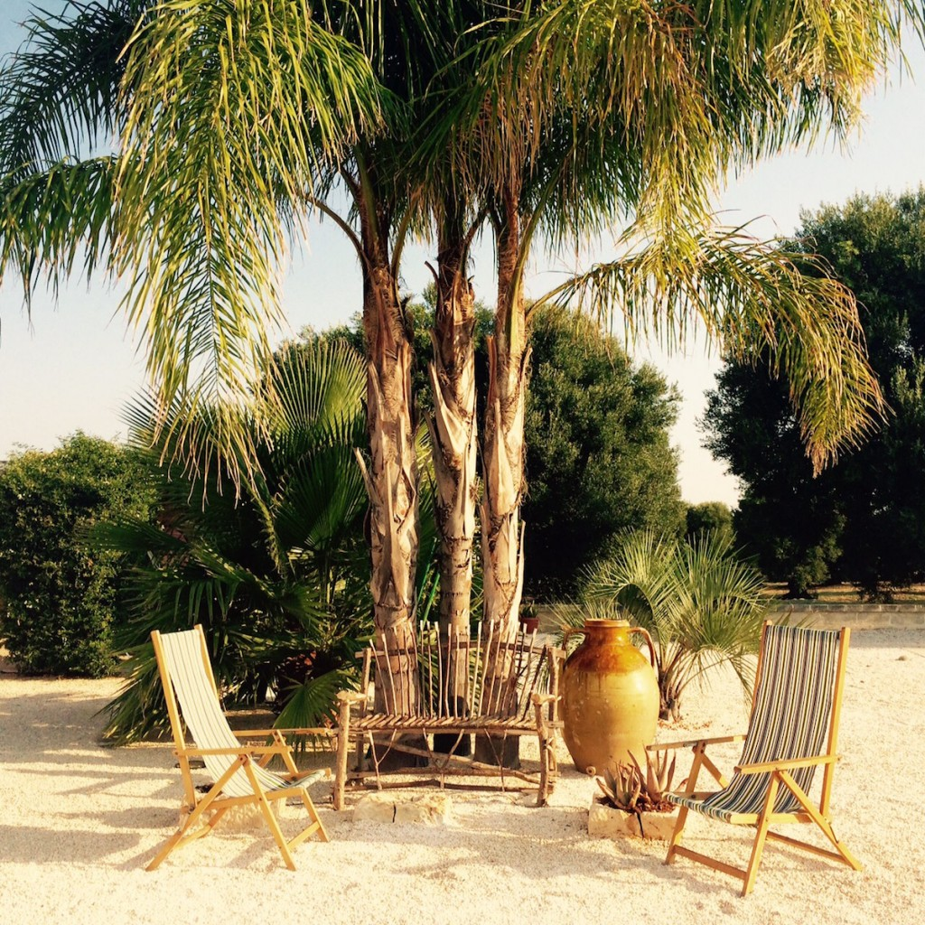Palm tree and seat